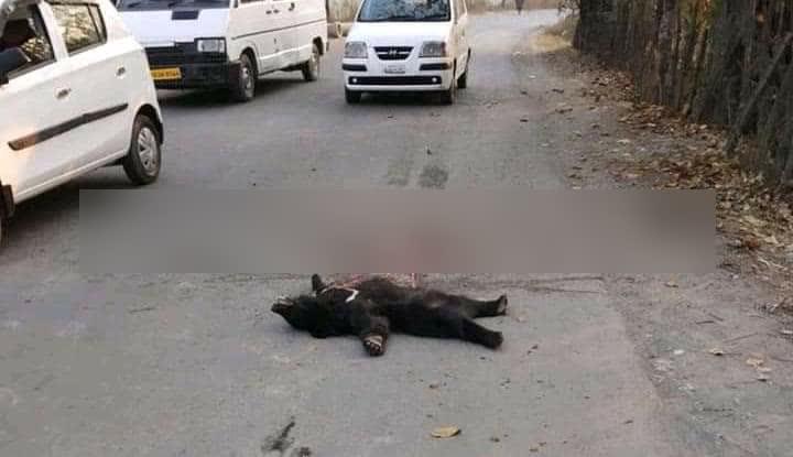 दक्षिण कश्मीर में मारे गए दो भालू