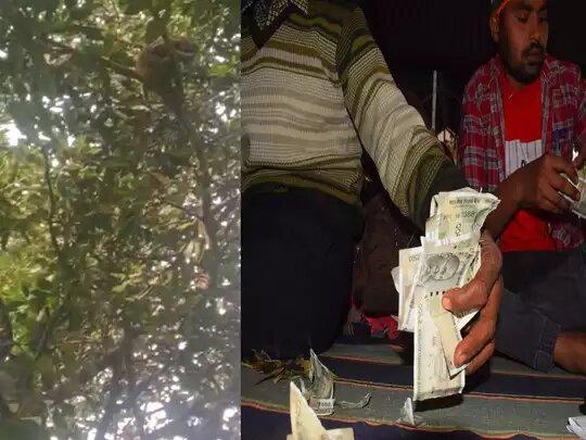 वीडियो वायरल-सीतापुर में बंदर ने लूटे 4 लाख रुपए