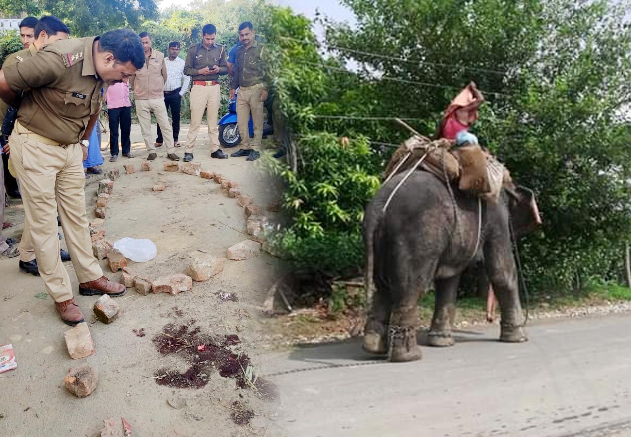कलश यात्रा में ढोल-नगाड़े सुनकर बहका हाथी, DJ गाड़ी को उठाकर पटका, नीचे दबने से बच्चे की मौत