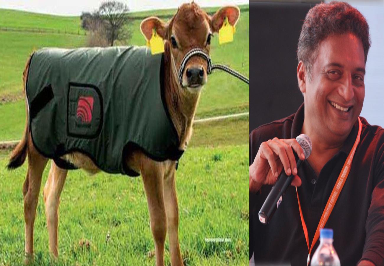 अयोध्या: गायों के लिए थ्री लेयर 'मखमली' विंटर कोट पर एक्टर प्रकाश राज ने किया ट्वीट, 'बेघर लोगों...स्कूलों''