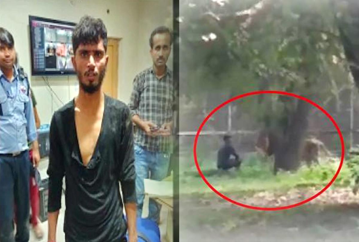 दिल्ली के चिड़ियाघर में शेर के सामने कूदा लड़का, सोशल मीडिया पर वीडियो वायरल
