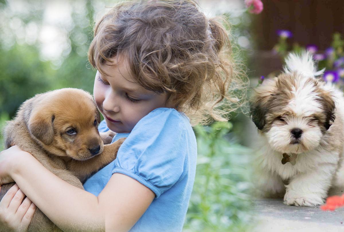 कुत्ता पालने का शौक रखने वाले हो जाएं सावधान, रजिस्ट्रेशन-जुर्माने की रकम जानकर हो जाएंगे हैरान